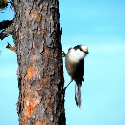 Wildlife in Voyageurs National Park